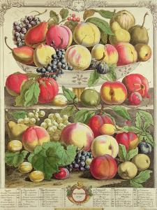 "September, from ""Twelve Months of Fruits"", by Robert Furber, 1732 by Pieter Casteels"