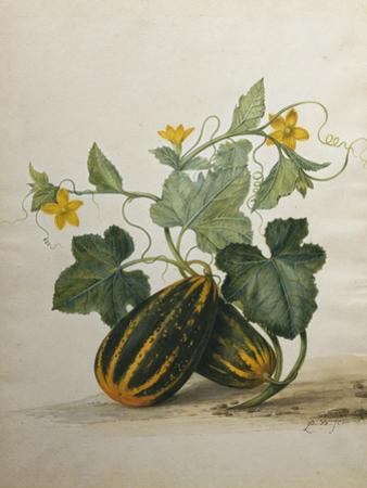 Study of Gourds and Flowers by Pieter Withoos