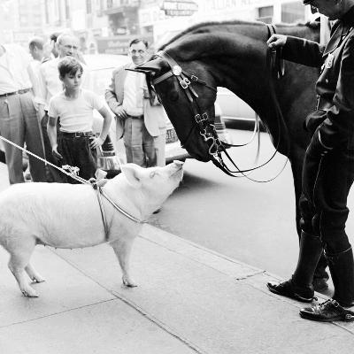 Pig and the Horse-Ecell-Photographic Print