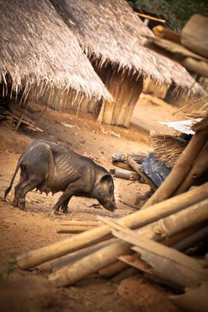 Pig in a Village-EvanTravels-Photographic Print