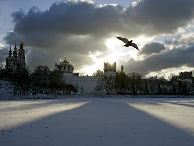 Pigeon Flies over a Frozen Pond Outside Novodevichi in Moscow--Photographic Print