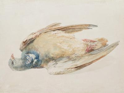 Pigeon, from the Farnley Book of Birds, C.1816-J^ M^ W^ Turner-Giclee Print
