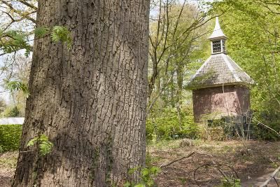 Pigeon House in Forest Scenery-YellowPaul-Photographic Print