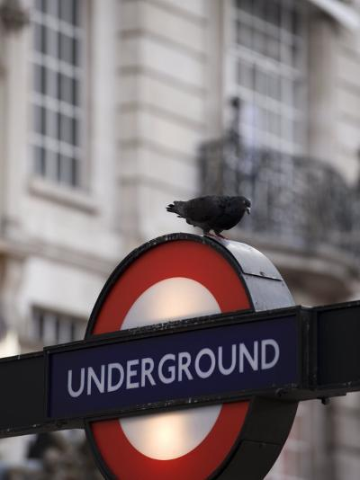 Pigeon Perched on a London Underground Sign-xPacifica-Photographic Print