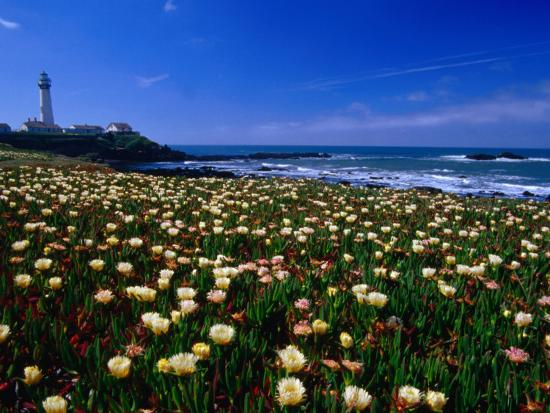 Pigeon Point Lighthouse of San Mateo County, with Wildflowers in Foreground, Sacramento, USA-Brent Winebrenner-Photographic Print