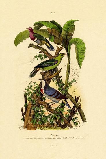 Pigeons, 1833-39--Giclee Print