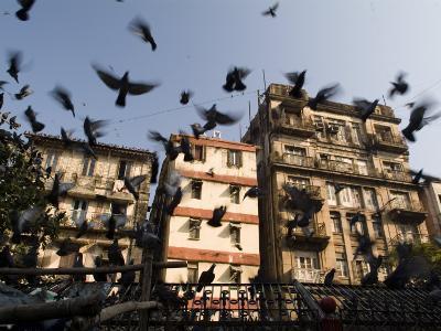 Pigeons Fly at Kothari Kaboota Khanna Near the Victoria Terminus-Abraham Nowitz-Photographic Print