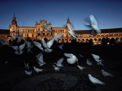 Pigeons in a Square in Seville-Steve Winter-Photographic Print