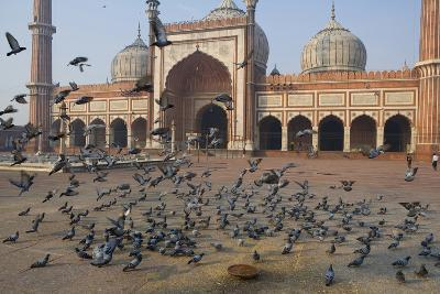Pigeons in Mosque, Jama Masjid Mosque, Delhi, India-Peter Adams-Photographic Print