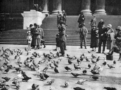 Pigeons in Trafalgar Square, London, 1926-1927--Giclee Print