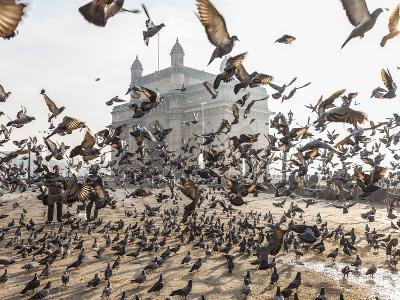 Pigeons, India Gate, Colaba, Mumbai (Bombay), India-Peter Adams-Photographic Print