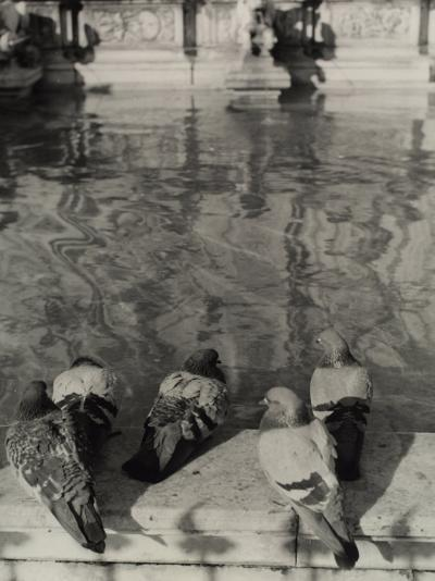 Pigeons on the Edge of the Gaia Fountain in Siena-Vincenzo Balocchi-Photographic Print