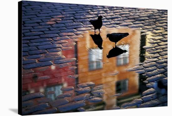 Pigeons-Allan Wallberg-Stretched Canvas Print