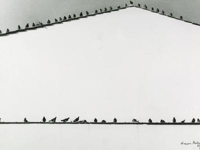 Pigeons-Vincenzo Balocchi-Photographic Print
