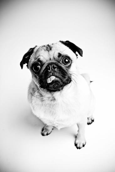 Piggie 7-Susan Sabo-Photographic Print