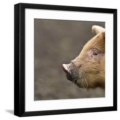 Piglet-Linda Wright-Framed Photographic Print