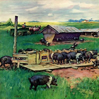 """""""Pigs Feeding,""""September 1, 1946-Matt Clark-Giclee Print"""