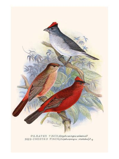 Pileated Finch and Red Crested Finch-F^w^ Frohawk-Art Print