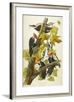 Pileated Woodpecker (Dryocopus Pileatus), Plate Cxi, from 'The Birds of America'-John James Audubon-Framed Giclee Print