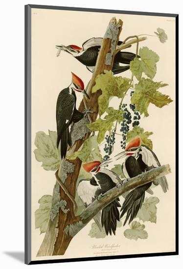 Pileated Woodpecker-John James Audubon-Mounted Premium Giclee Print
