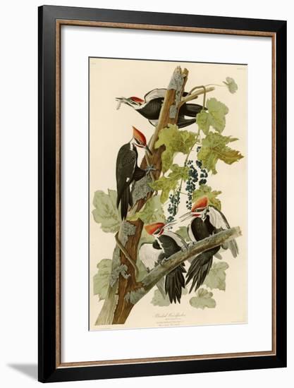 Pileated Woodpecker-John James Audubon-Framed Premium Giclee Print