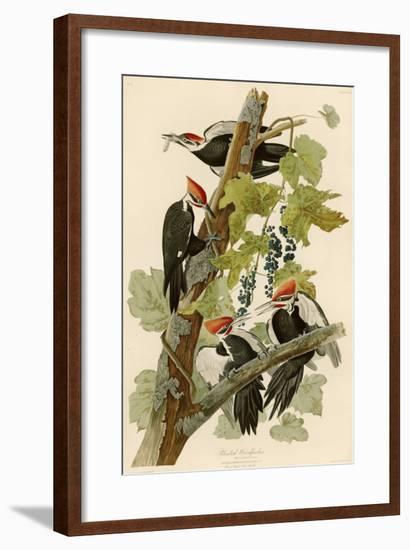 Pileated Woodpecker-John James Audubon-Framed Giclee Print