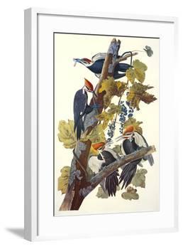 Pileated Woodpecker-John James Audubon-Framed Art Print