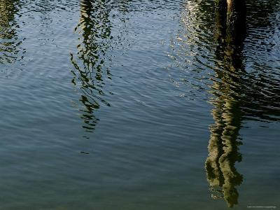 Pilings of a Pier Reflected in Block Island Sound-Todd Gipstein-Photographic Print