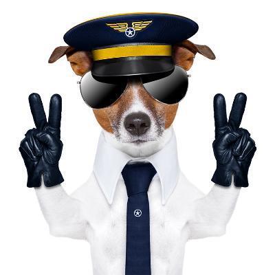Pilot Dog-Javier Brosch-Photographic Print
