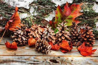 https://imgc.artprintimages.com/img/print/pine-cones-for-fall_u-l-q1bkg1s0.jpg?p=0