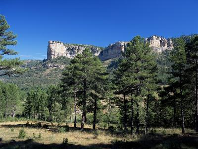 Pine Forest and Cliffs Above the Jucar Gorge, Cuenca, Castilla-La Mancha (New Castile), Spain-Ruth Tomlinson-Photographic Print