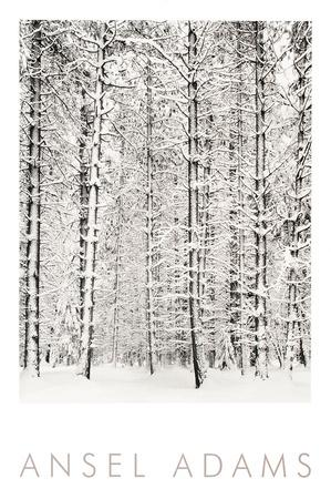 https://imgc.artprintimages.com/img/print/pine-forest-in-the-snow-yosemite-national-park_u-l-f8jy4l0.jpg?p=0
