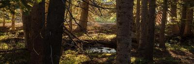 Pine Forest Rocky Mtns Colorado-Steve Gadomski-Photographic Print