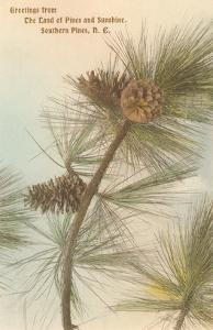 Pine Needles and Cones, Southern Pines, North Carolina
