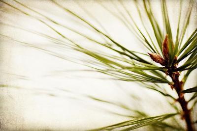 Pine Needles-Jessica Rogers-Giclee Print