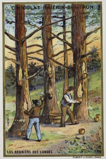 Pine Resin Collectors in the Landes, France--Giclee Print