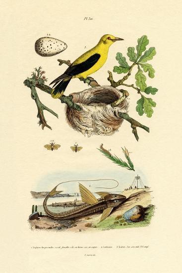 Pine Sawfly, 1833-39--Giclee Print