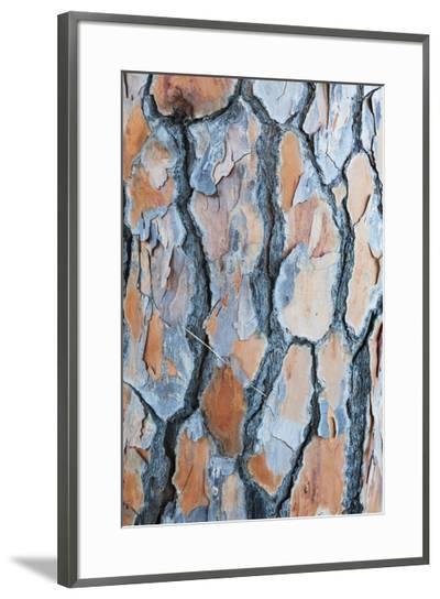 Pine Tree Bark-Frank Lukasseck-Framed Photographic Print