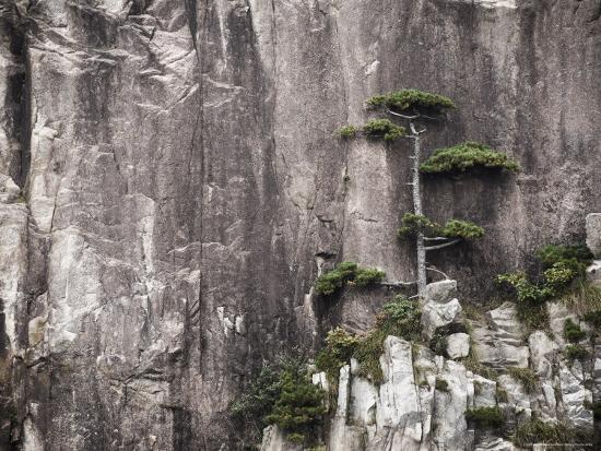 Pine Tree, White Cloud Scenic Area, Mount Huangshan (Yellow Mountain), Anhui Province-Jochen Schlenker-Photographic Print