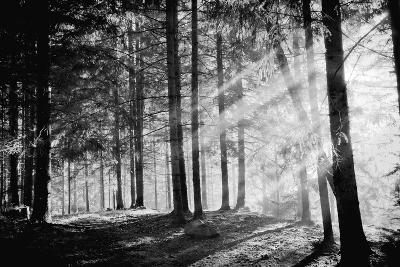 Pine Tree with Lights and Fog,Black and White Photo-hofhauser-Photographic Print