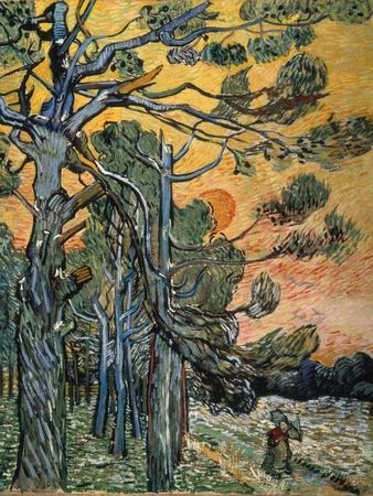 Pine Trees at Sunset, 1889-Vincent van Gogh-Premium Giclee Print