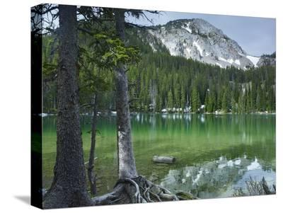 Pine trees on the edge of Fairy Lake, Montana-Tim Fitzharris-Stretched Canvas Print