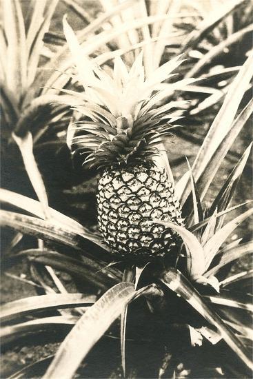 Pineapple on Plant--Art Print