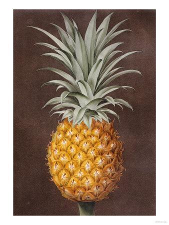 https://imgc.artprintimages.com/img/print/pineapple_u-l-o66zh0.jpg?p=0