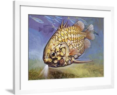 Pinecone Fish (Monocentris Japonica), Monocentridae, Drawing--Framed Giclee Print