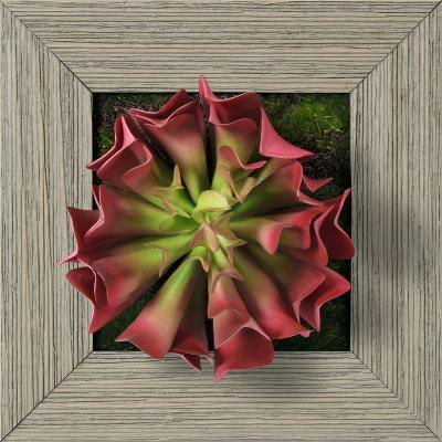 Pink Aeonium Square - Farmhouse Gray--Dimensional Product