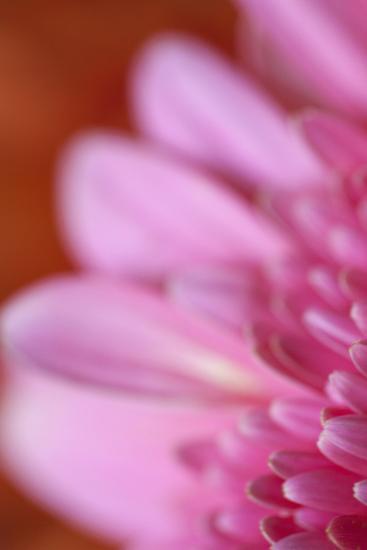 Pink Afternoon-Karyn Millet-Photographic Print