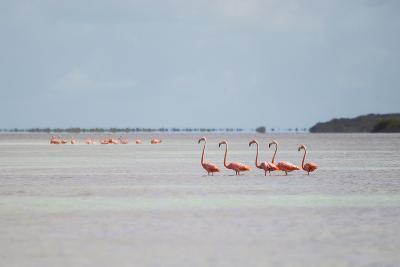 Pink American Flamingo Habitat at the Flamingo Salt Pond, Turks and Caicos-Mike Theiss-Photographic Print