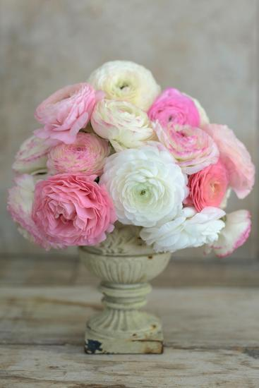 Pink And White Ranunculus In Floral Arrangement Photographic Print Georgianna Lane Art Com