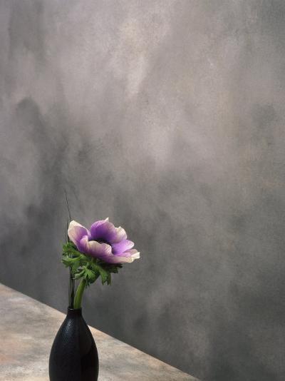 Pink Anemone in Vase-David Wasserman-Photographic Print